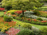 Butchart Gardens in Bloom Photographic Print by Tim Laman