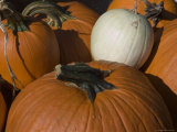 Close View of Freshly Picked Pumpkins Photographic Print by Stacy Gold