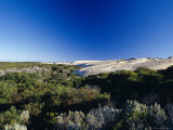 Coastal Tea Tree Shrubs and White Sand Dunes against a Vast Blue Sky, Australia Photographic Print by Jason Edwards