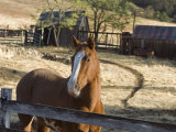Horse on Santa Rosa Creek Road, Cambria, California Photographic Print by Rich Reid