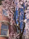 Cherry Blossoms and Turreted Home in Washington, District of Columbia Photographic Print by David Evans