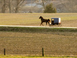 Amish Horse and Buggy, Pennsylvania Photographic Print by Tim Laman