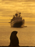 Antarctic Fur Seal and Expedition Ship, Antarctica Photographic Print by Ralph Lee Hopkins