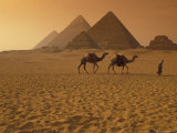 Giza Pyramids with Man Leading Two Camels Across the Desert in Egypt Lámina fotográfica por Richard Nowitz