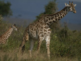 Adult Masai Giraffe and Calf Photographic Print by Michael Nichols