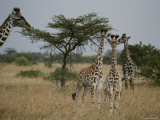 Adult Masai Giraffe with Three Calves Photographic Print by Michael Nichols