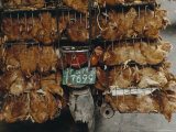 Caged Chickens Are Transported on the Back of a Motorbike, Guangzhou, China Photographic Print by James L. Stanfield