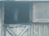 Brown Horse in a Barn in the Fog, Block Island, Rhode Island Photographic Print by Todd Gipstein