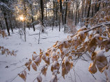 Fresh Snow in the Woods, Lexington, Massachusetts Photographic Print by Tim Laman