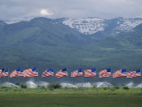 American Flags Honoring Veterans of Foreign Wars Fly on Memorial Day, Utah Photographic Print by James P. Blair