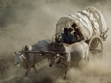 Bullock Cart Races Mark the Full-Moon Day of Kason Celebrating the Buddha's Birthday Photographic Print by James L. Stanfield