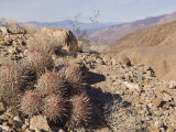 Cactus Close-Up on Rock Desert Hillside, California Photographic Print by James Forte