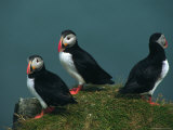Iceland, Three Puffins on Rock Cliff Photographic Print by  Brimberg & Coulson