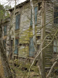 Abandoned House on the Chesapeake Bay Overgrown by Trees and Vines Photographic Print by David Evans