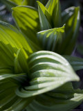 Close Up Shot of Indigenous Chinese Plants, Shennongjia, China Photographic Print by David Evans