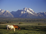 Horses Graze at Lost Creek Ranch in Moose, Wyoming Photographic Print by Richard Nowitz