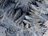 Close View of Frost Crystals Photographic Print by Tim Laman