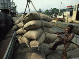 Cameroonian Laborer Guides Burlap Sackfuls of Cacao Beans from a Truck into a Barge Photographic Print by James L. Stanfield