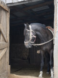 Bridled Horse Stands Doorway of Barn in Quemchi, Chile Photographic Print by David Evans