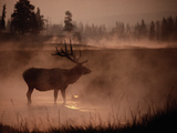 Bull Elk in the Morning in the Smoky Atmosphere of Yellowstone National Park Fires of 1988 Fotografiskt tryck av Michael S. Quinton