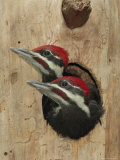 Baby Pileated Woodpeckers Peer from the Tree Hole Nest Papier Photo par George Grall