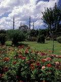 Flowers in Sultanahmet Square with the Blue Mosque in the Background, Istanbul, Turkey Photographic Print by Richard Nowitz