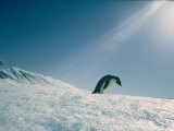 Adelie Penguin Photographic Print by Bill Curtsinger