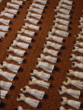 Catholic Clergy Prostrate Themselves During Ordination Ceremonies Photographic Print by James L. Stanfield
