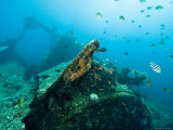 Diving on Wreck of Liberty, An American Cargo Ship Sunk in 1942, Bali, Indonesia Photographic Print by Tim Laman