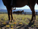 Horses Graze as a Wrangler Works on Spring Creek Ranch in Jackson, Wyoming Photographic Print by Richard Nowitz