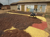 Awoman Bends to Spread Brown Cacao Beans on a Red-And- Yellow Tarp to Dry in the Sun Lámina fotográfica por James L. Stanfield