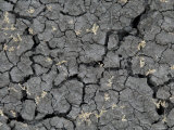 Dry Weather Creates Deep Cracks in the Dirt, Billings, Montana Photographic Print by Joel Sartore