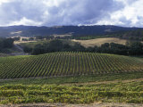 Grape Vines on Opolo Vineyards and Surrounding Oak Woodlands, California Photographic Print by Rich Reid