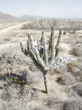 Desert Landscape of Baja Mexico, California Photographic Print by Gina Martin