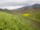 Dirt Road, Wheat and Rapeseed Fields, Mountains in Background, China Photographic Print by David Evans