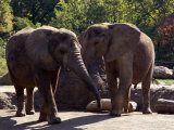 Elephants at the Pittsburgh Zoo, Pennsylvania Photographic Print by Stacy Gold