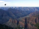 Fly on a Window Grand Canyon National Park, Arizona Photographic Print by John Burcham