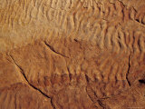 Fossilised Water Ripples in Sandstone, from an Ancient Inland Sea, Australia Photographic Print by Jason Edwards