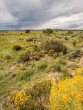 High Desert in Bloom Along Hwy 285 North of Tres Piedras, New Mexico Photographic Print by Michael S. Lewis