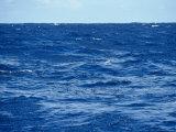 Flock of Wilsons Storm Petrels Feeding on the Ocean Surface, Australia Lámina fotográfica por Edwards, Jason