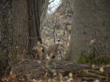 Curious Wild Doe in the Rock Creek Woods Photographic Print by Stephen St. John