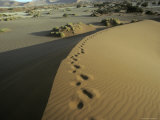 Hikers Footprints Rise Up a Sand Dune Crest in a Baking Desert Photographic Print by Jason Edwards