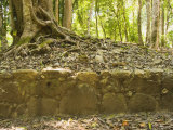 Excavated Wall with Tree Growing above at the Caracol Maya Site, Belize Photographic Print by James Forte