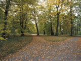 Fallen Autumn Leaves on a Path in the Sans Souci Park Palace Gardens Photographic Print by Jason Edwards