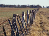 Falling Down Farm Fence During Drought Eludes to Hardship, Australia Photographic Print by Jason Edwards