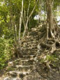 Excavated Stairs with Tree Growing above at the Caracol Maya Site, Belize Photographic Print by James Forte