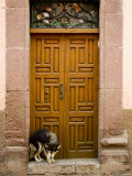 Dog in a Doorway, San Miquel de Allende, Mexico Photographic Print by David Evans