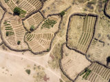 Irrigated Gardens Along the Niger River, Mali Photographic Print by Michael Fay