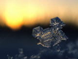 Ice Crystal at Sunrise, Alaska Photographic Print by Michael S. Quinton