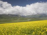 Fields of Wheat and Rape and Distant Mountains with White Clouds, Qinghai, China Photographic Print by David Evans